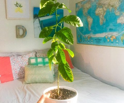 My Lemon Tree Journey (Part 2)
