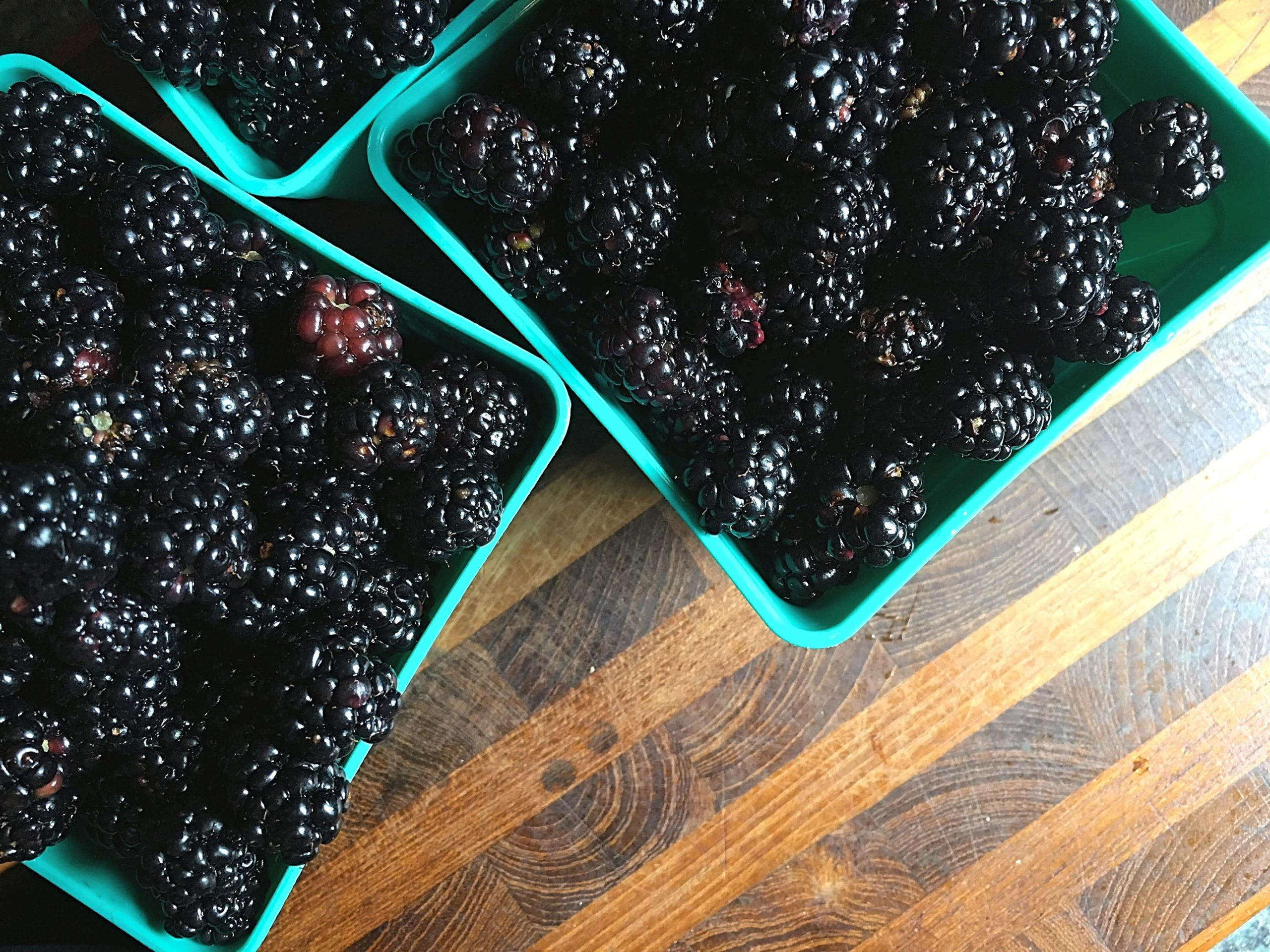 Wild Blackberry Harvest